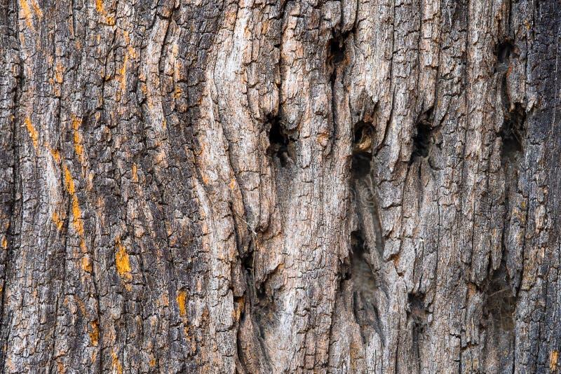 Árbol de madera viejo fotografía de archivo