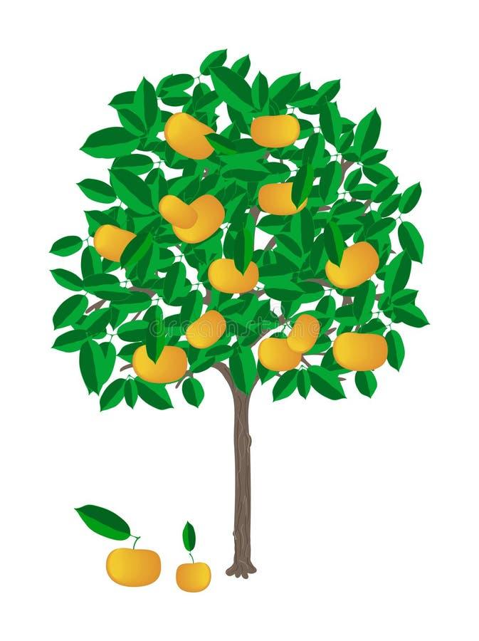 Árbol de mandarina ilustración del vector