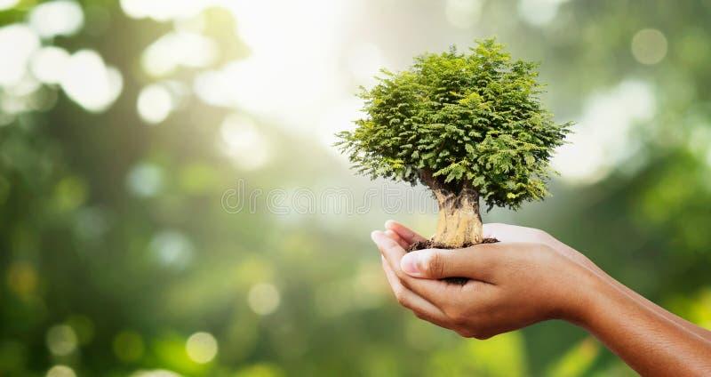 árbol de mano en verde negro con sol concepto ecológico imagen de archivo libre de regalías