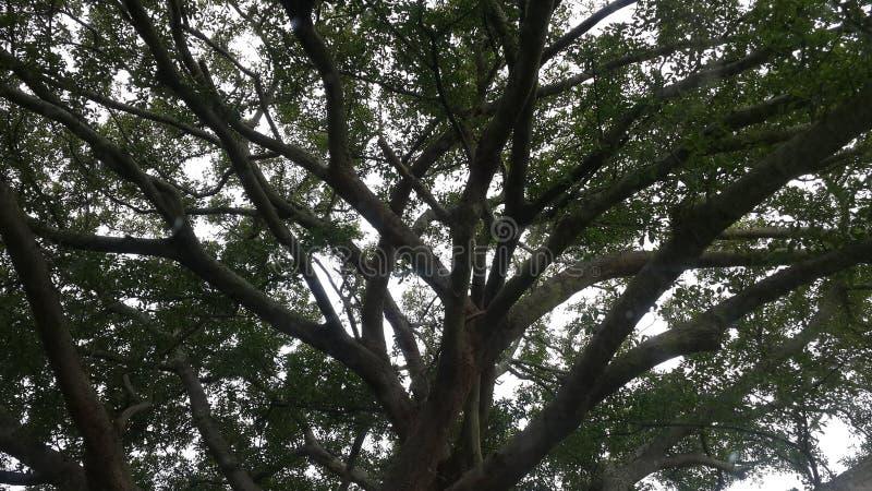 Árbol de navidad africano fotos de archivo libres de regalías