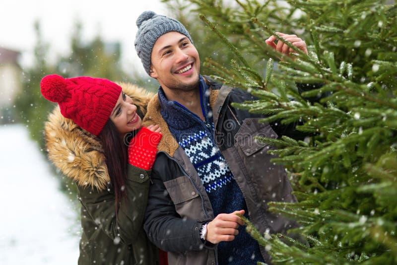 Árbol de navidad de compra de los pares fotos de archivo