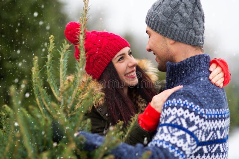 Árbol de navidad de compra de los pares jovenes imagen de archivo libre de regalías