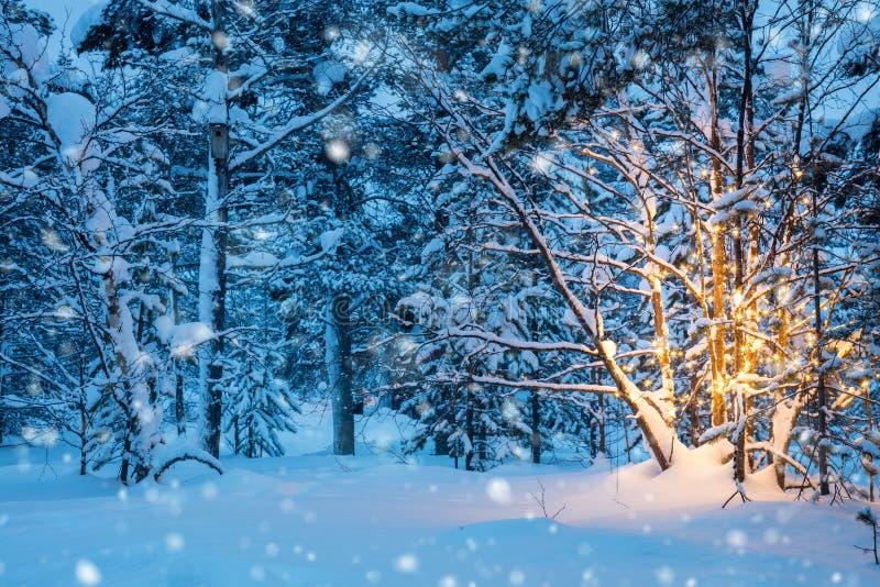 Árbol de navidad con las luces de la guirnalda y nieve en bosque del invierno imágenes de archivo libres de regalías