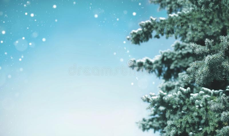 Árbol de navidad cubierto con la nieve para el fondo, copos de nieve que vuelan fotos de archivo libres de regalías