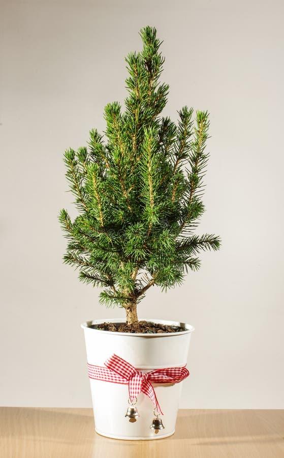 Árbol de navidad en conserva miniatura en la tabla imagenes de archivo