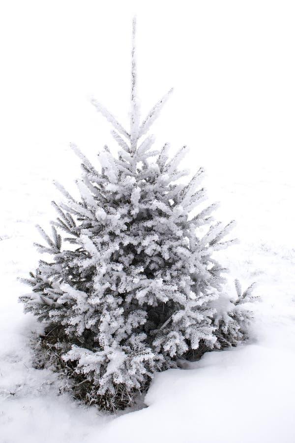 rbol de navidad en escarcha contra la nieve blanca