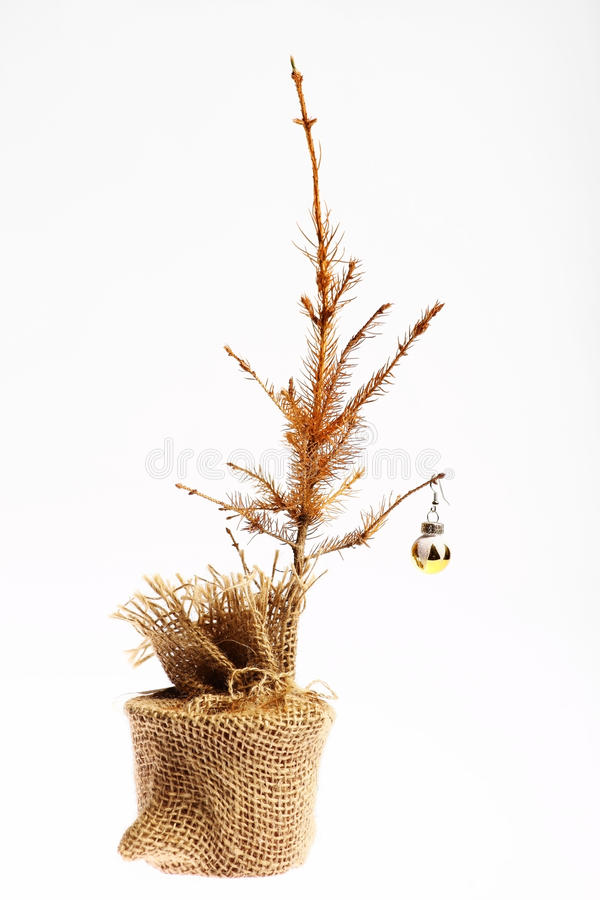 Árbol de navidad muerto foto de archivo libre de regalías