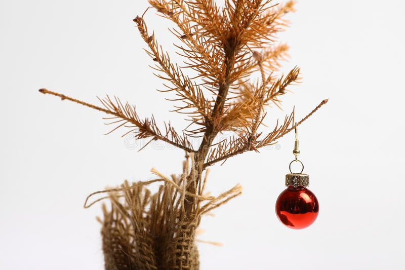 Árbol de navidad muerto fotografía de archivo libre de regalías