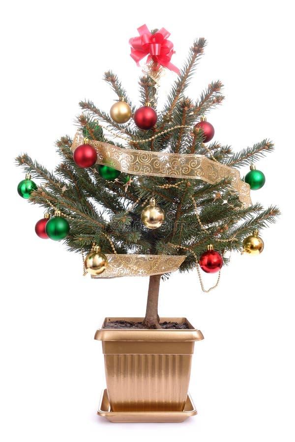 Árbol de navidad Potted fotografía de archivo libre de regalías