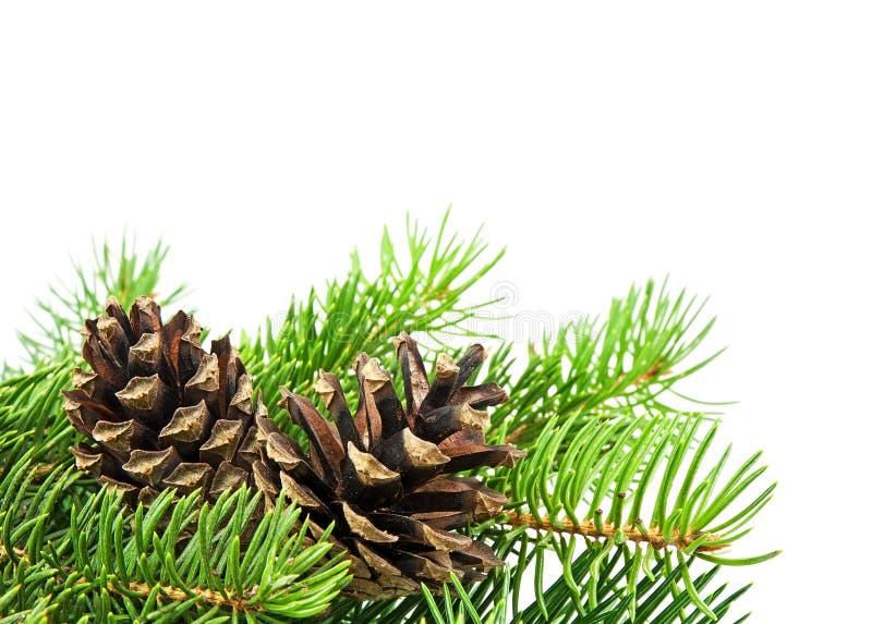 Árbol de navidad y conos imagen de archivo