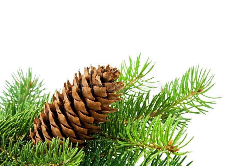 Árbol de navidad y conos imagenes de archivo
