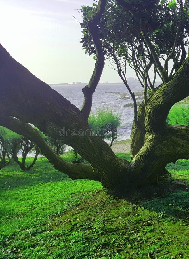 Árbol de Oporto La belleza en naturaleza fotografía de archivo libre de regalías