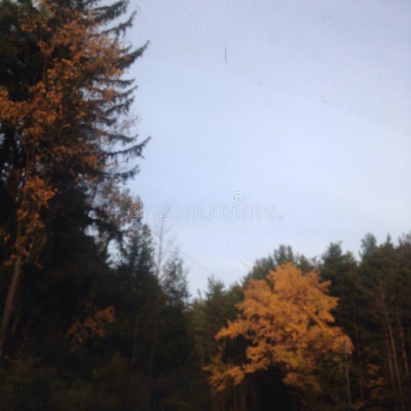 Árbol de oro foto de archivo