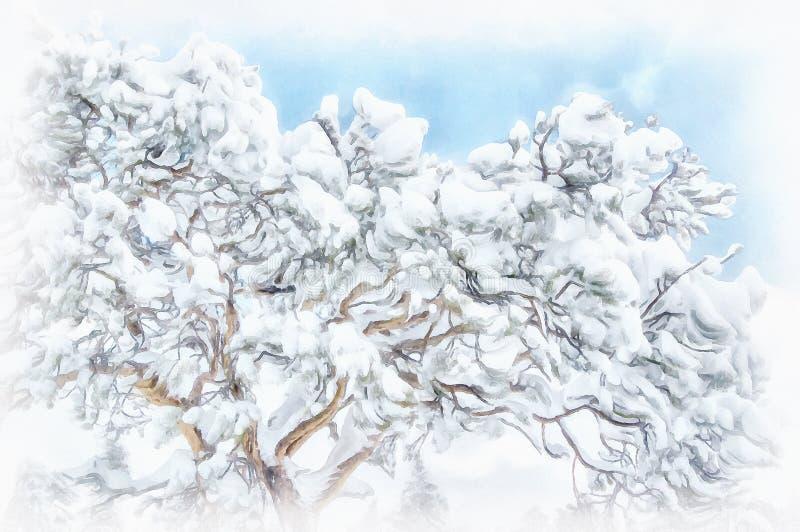 Árbol de pino cubierto con nieve después de nevada fotos de archivo libres de regalías
