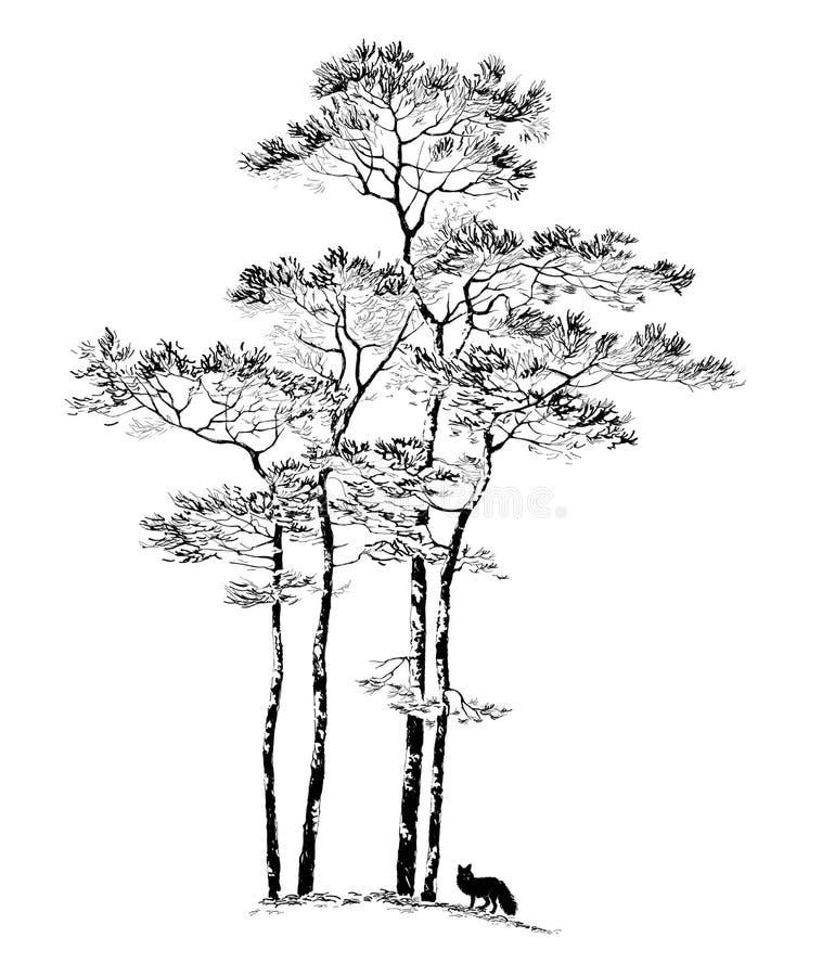 ÁRBOL de PINO dibujado mano, bosquejo stock de ilustración