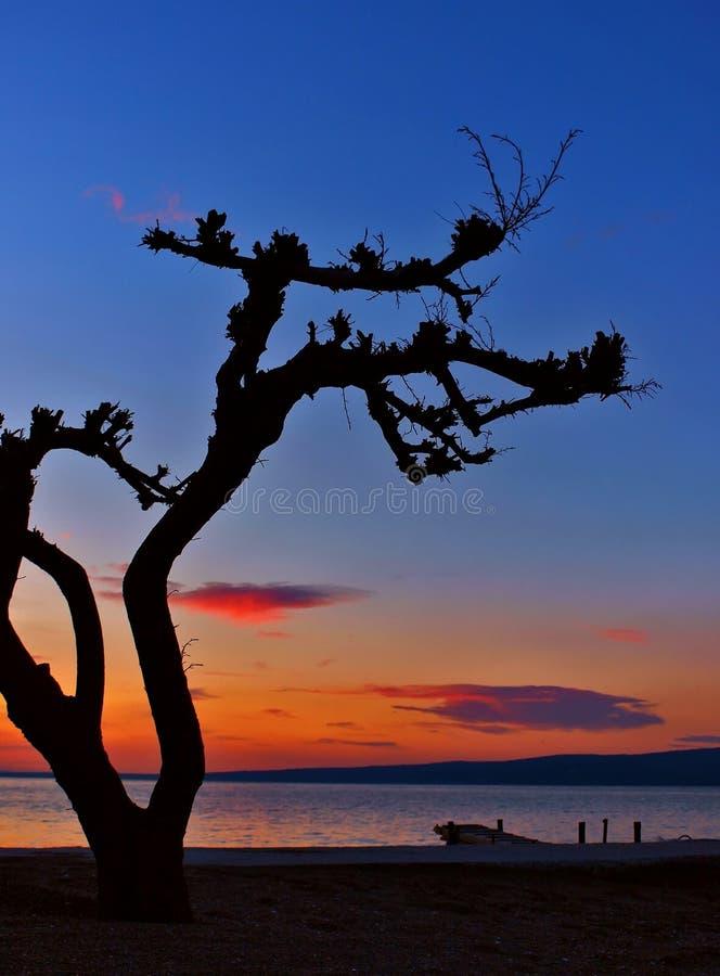 Árbol de pino en la puesta del sol 2 fotografía de archivo libre de regalías