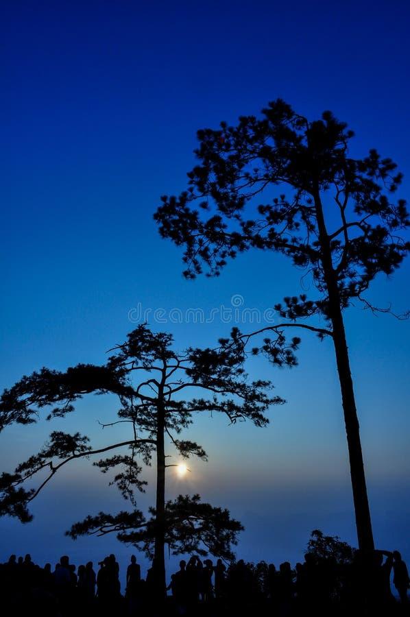 Árbol de pino en puesta del sol fotografía de archivo