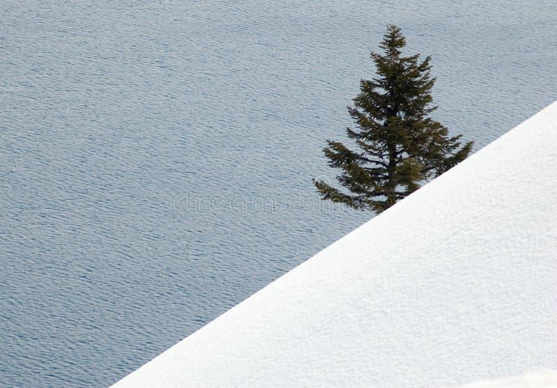 Árbol de pino solitario imagen de archivo libre de regalías