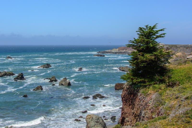 Árbol de pino solitario en un acantilado en el Océano Pacífico, Big Sur California los E.E.U.U. imagen de archivo