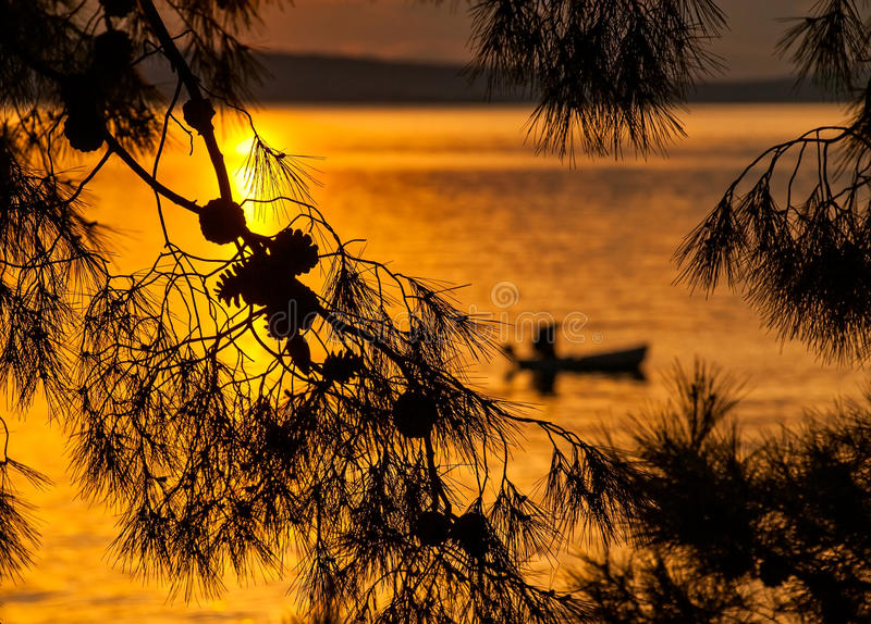 Árbol de pino y silueta del pescador en puesta del sol imagen de archivo libre de regalías