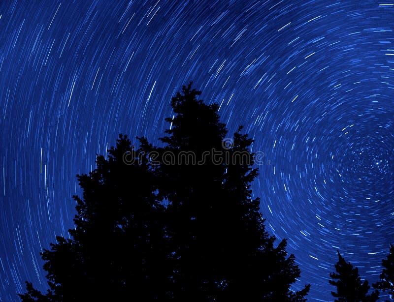 Árbol de pino y Startrails imagenes de archivo