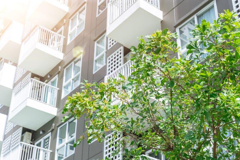 Árbol de plantas verdes vivientes del espacio público exterior del edificio de refrigeración del condominio foto de archivo