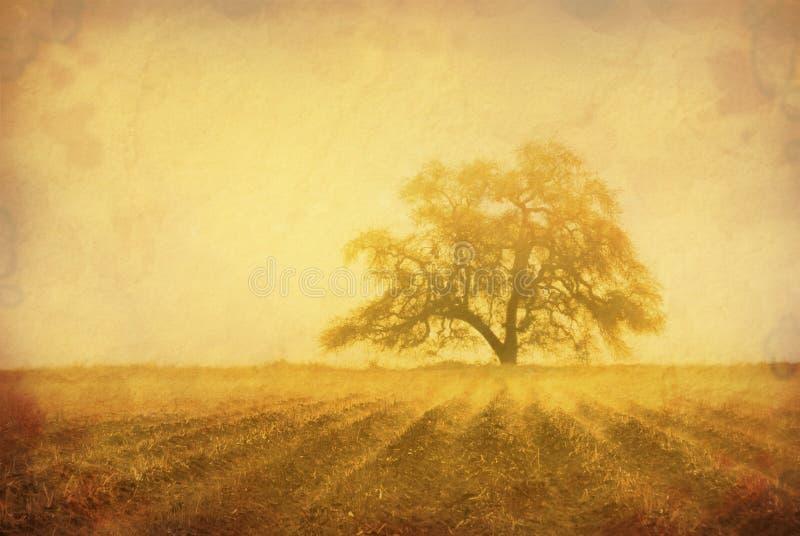 Árbol de roble de Grunge imagen de archivo libre de regalías