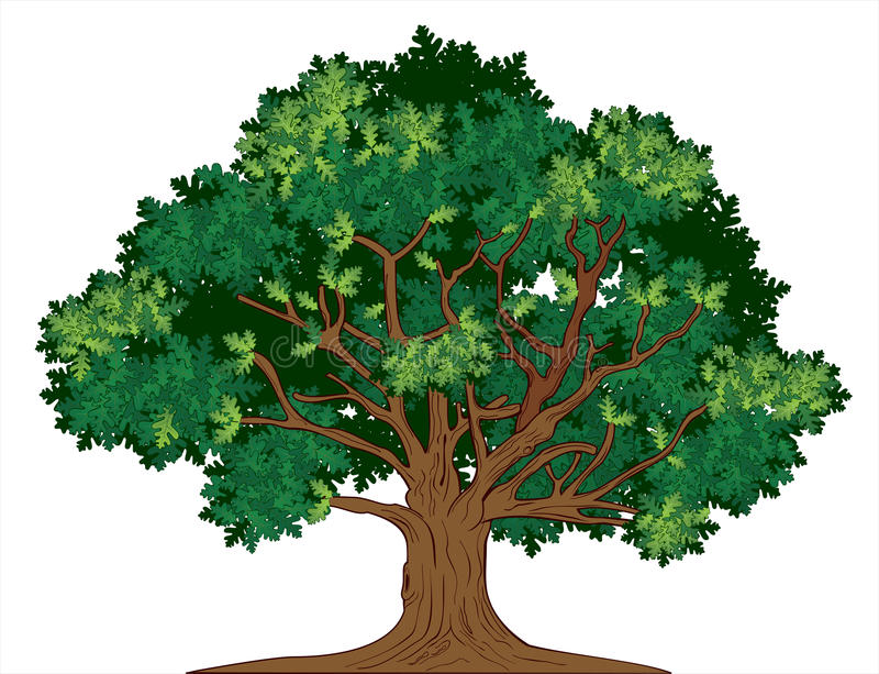 Árbol de roble del vector