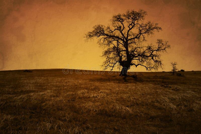 Árbol de roble descubierto antiguo de Grunge foto de archivo libre de regalías