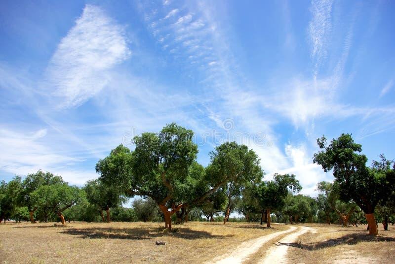 Árbol de robles en Portugal. fotos de archivo libres de regalías