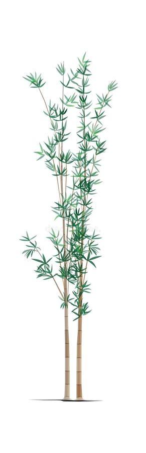 árbol del ฺBamboo stock de ilustración