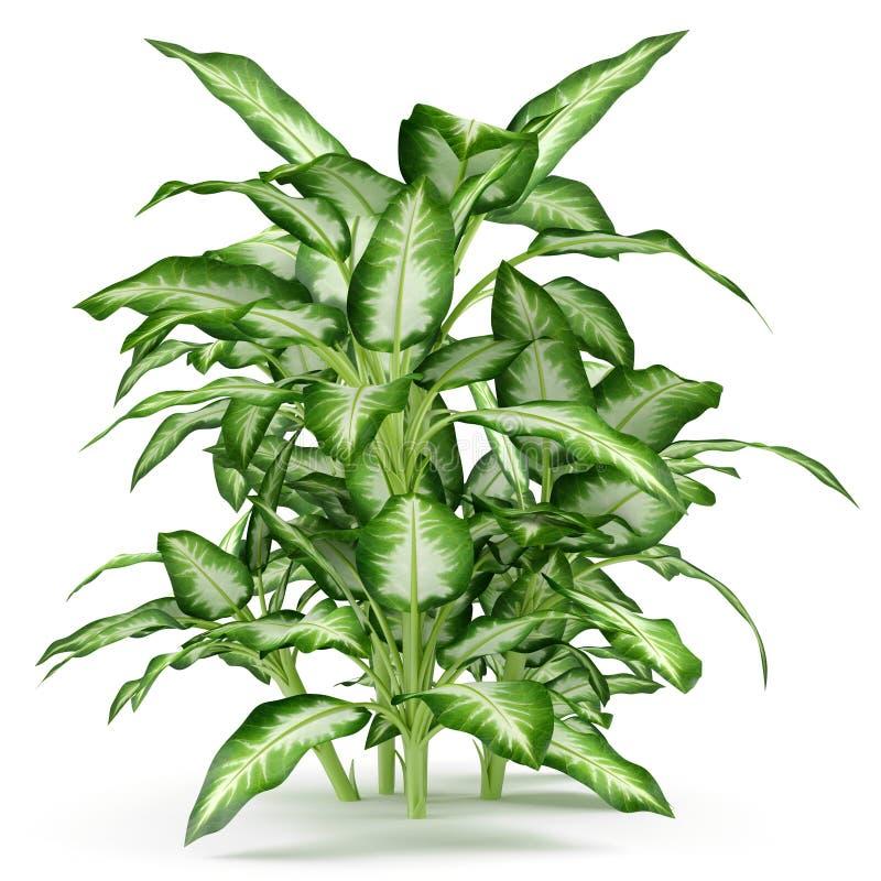 Árbol del arbusto de la planta libre illustration