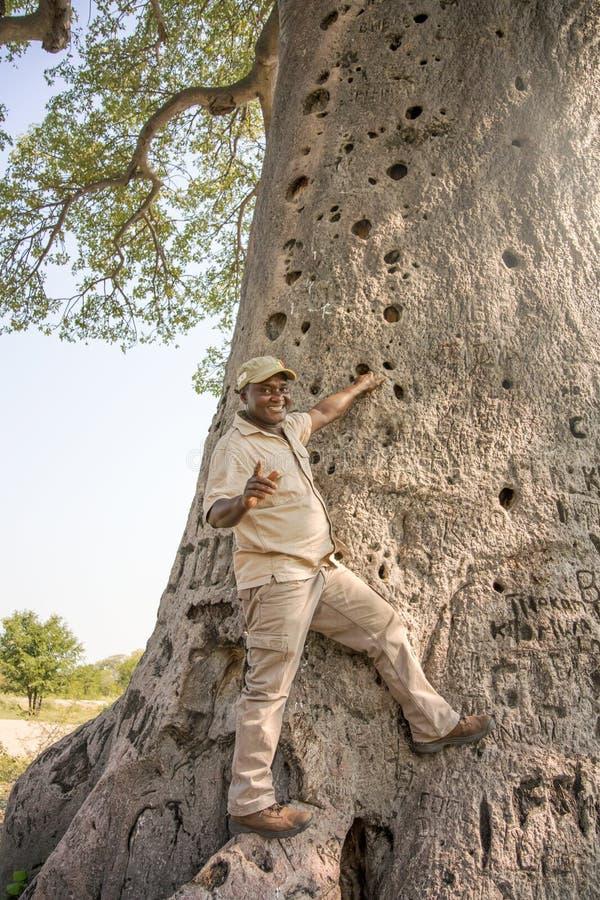 Árbol del baobab en Botswana fotografía de archivo