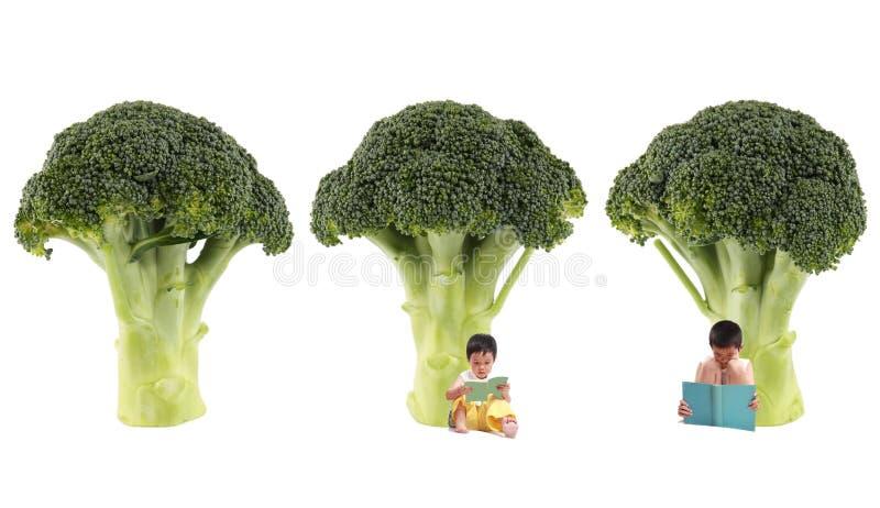 Árbol del bróculi imagen de archivo
