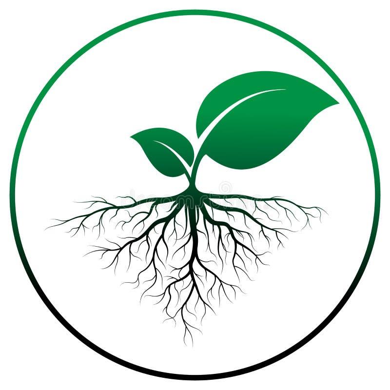 Árbol del brote con la raíz libre illustration