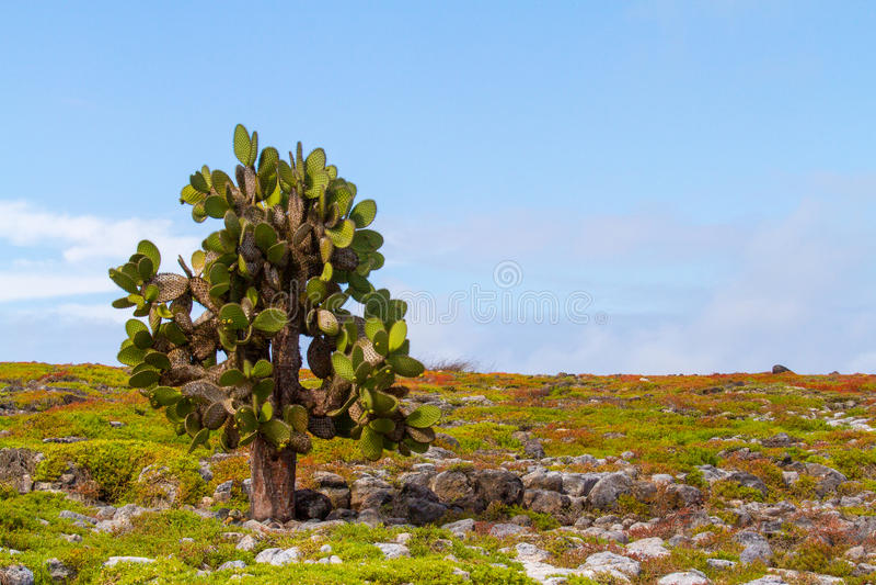 Árbol del cactus imagen de archivo libre de regalías