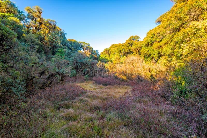 Árbol del campo de hierba con el cielo azul imágenes de archivo libres de regalías