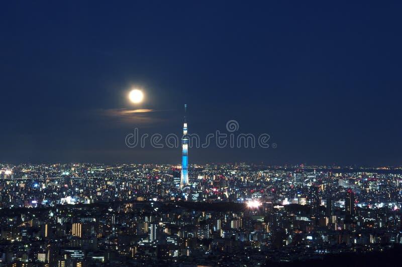Árbol del cielo de Tokio foto de archivo