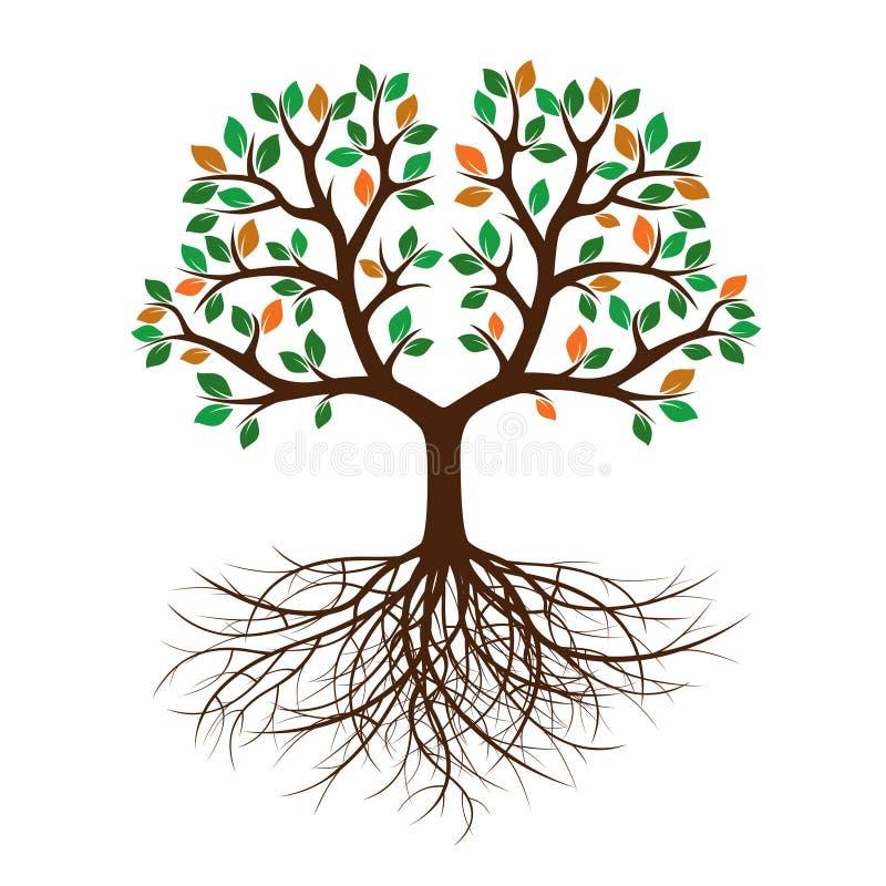 rbol del color con las hojas y las ra ces ilustraci n del