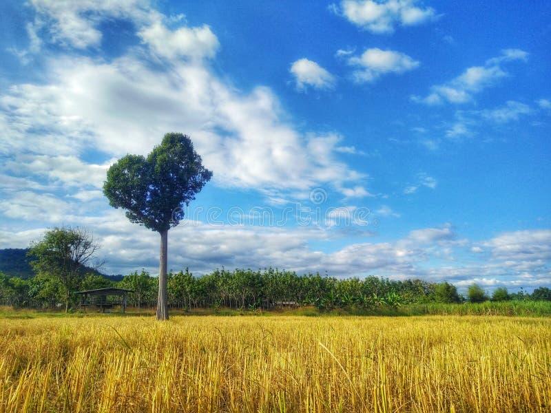 Árbol del corazón debajo del cielo azul imagen de archivo libre de regalías