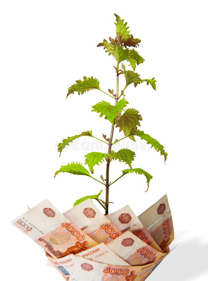 Árbol del dinero Bush crece del dinero Dinero de diversos países fotos de archivo libres de regalías