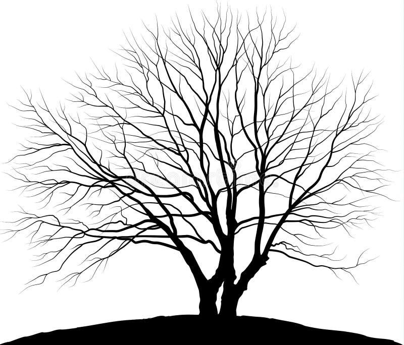 Árbol del ejemplo del vector Roble de la silueta sin las hojas libre illustration