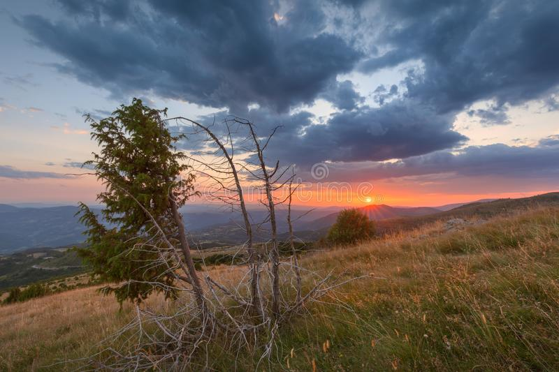 Árbol del enebro en la montaña con puesta del sol hermosa en fondo fotografía de archivo libre de regalías