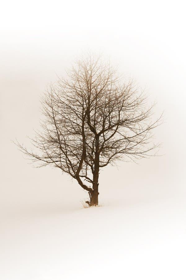 Árbol del invierno fotografía de archivo libre de regalías