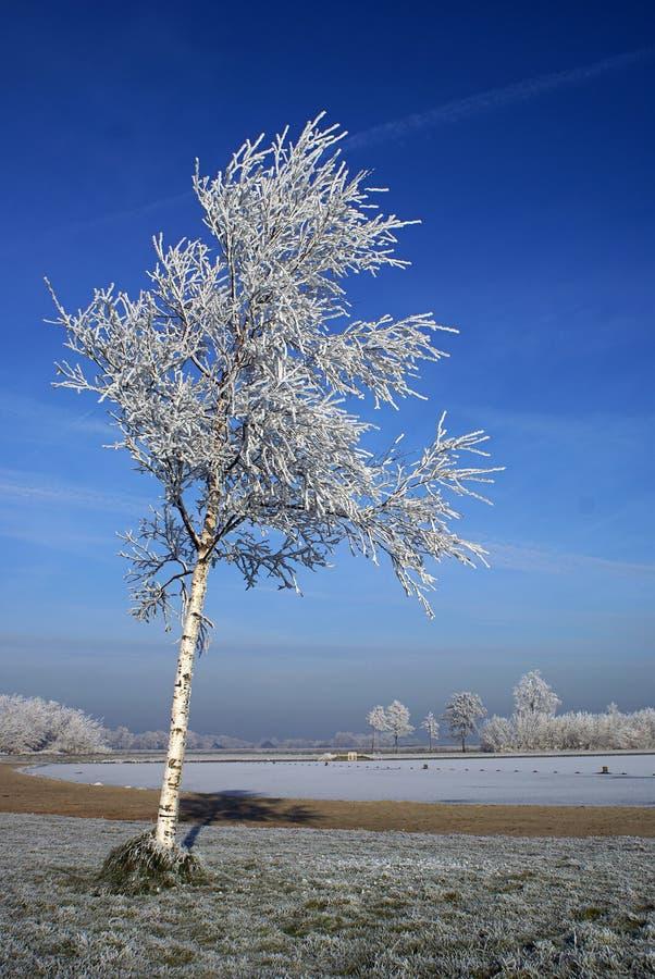 Árbol del invierno con el cielo azul imágenes de archivo libres de regalías