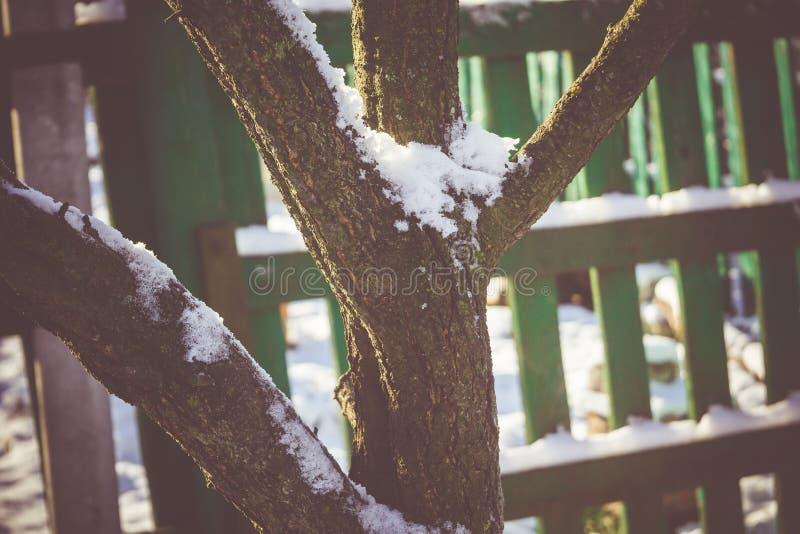 Download Árbol Del Invierno Con Macro De La Nieve Foto de archivo - Imagen de cierre, helada: 64211606