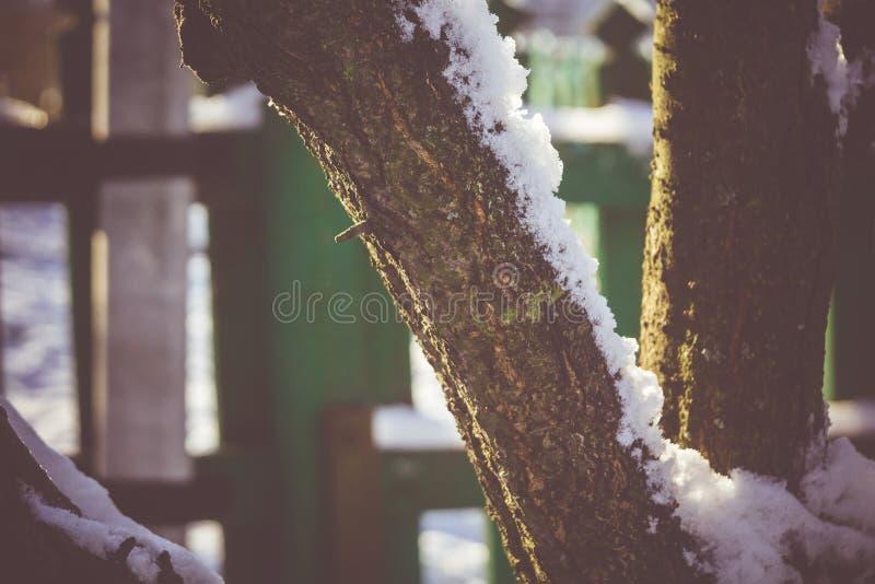 Download Árbol Del Invierno Con Macro De La Nieve Imagen de archivo - Imagen de fondo, nieve: 64211609