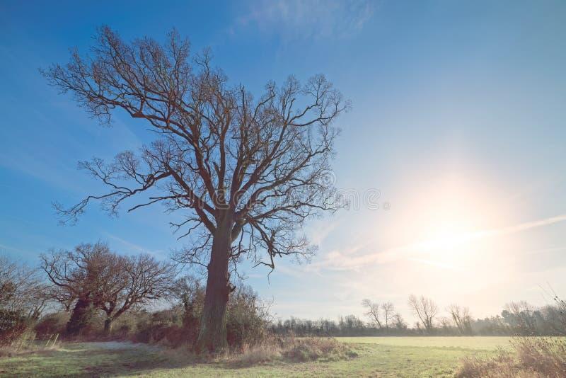 Árbol del invierno con Sun bajo fotos de archivo libres de regalías
