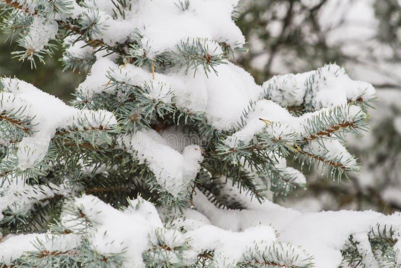 Árbol del invierno cubierto con nieve como fondo Cierre para arriba imagen de archivo