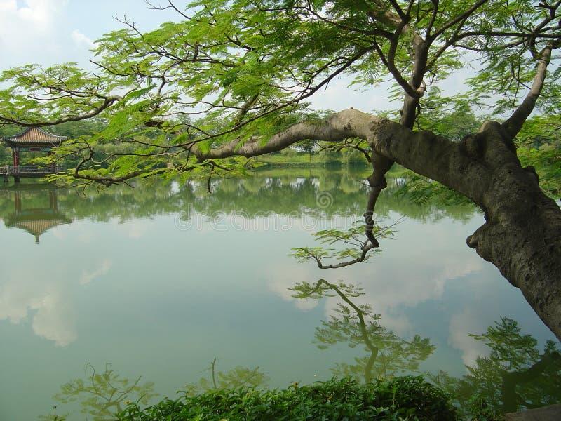 Árbol del lago fotos de archivo